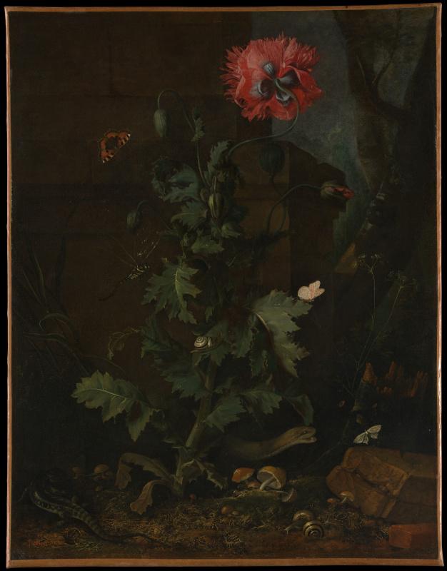 Отто Марсеус ван Скрик. Натюрморт с маком, насекомыми и рептилиями