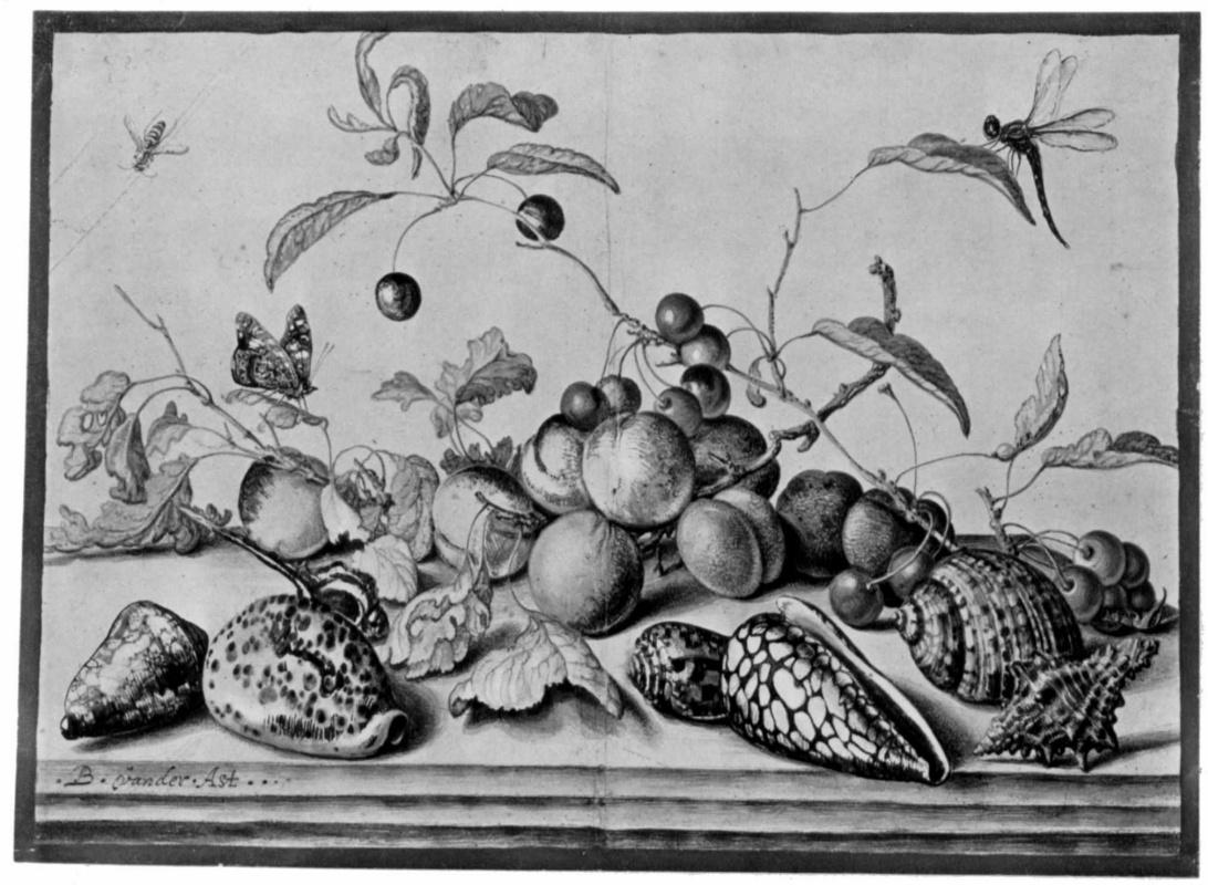 Балтазар ван дер Аст. Натюрморт с фруктами и раковинами