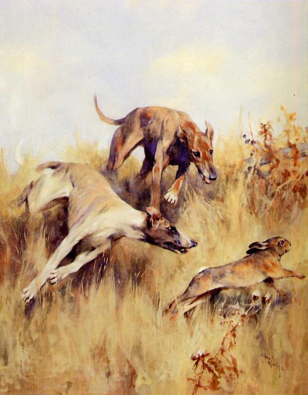Артур Уордл. Собачьи бега в погоне за кроликом
