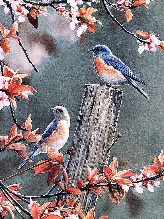 Сьюзан Бордет. Синие птицы в цветках сливы