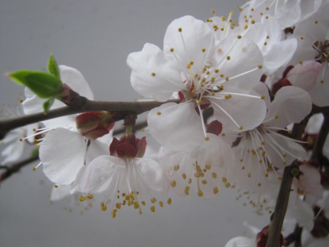 "Alexey Grishankov (Alegri). ""April bloom"" (8)"