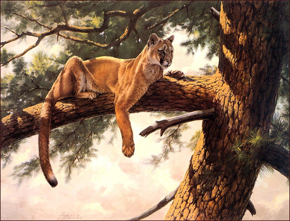 Гай Кохелич. Лев в Скалистых Горах