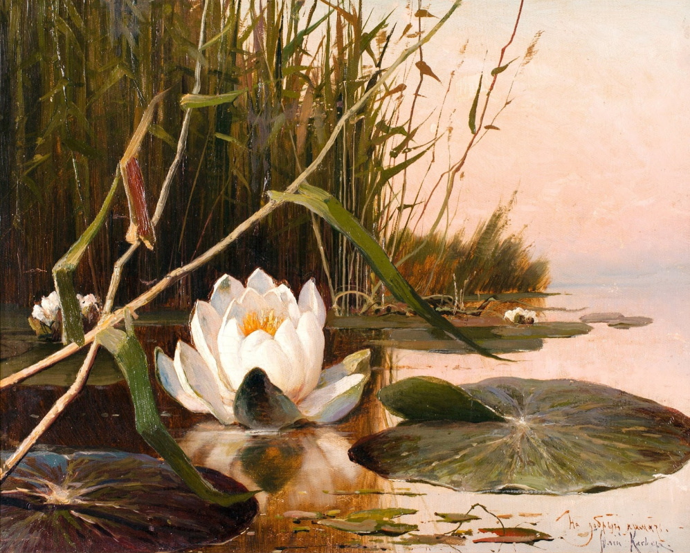 Julius Klever. Lily