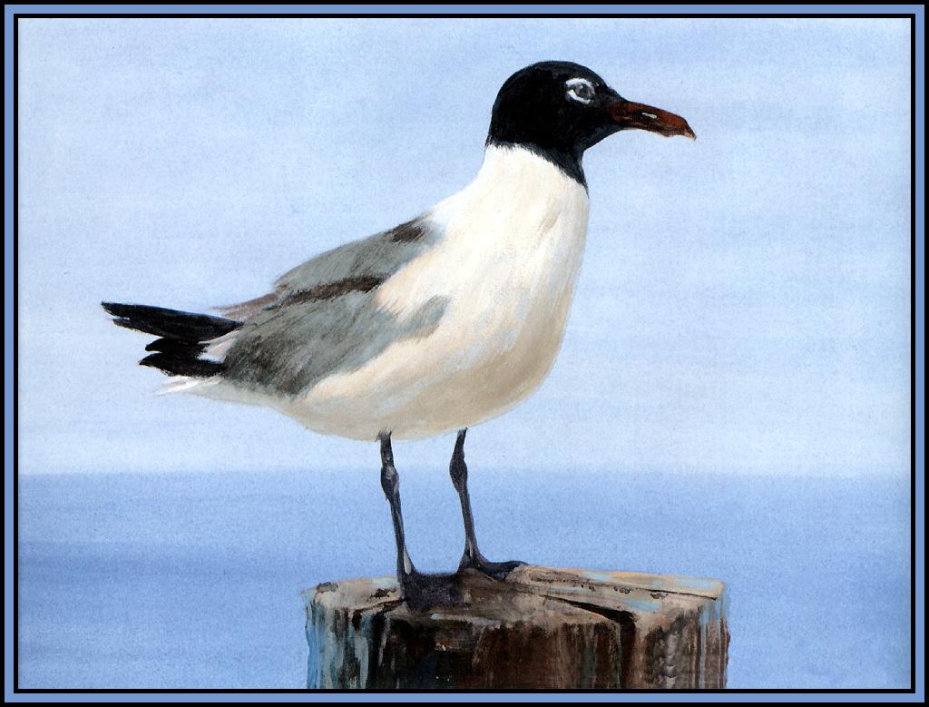 Roger Bansemer. Seagull