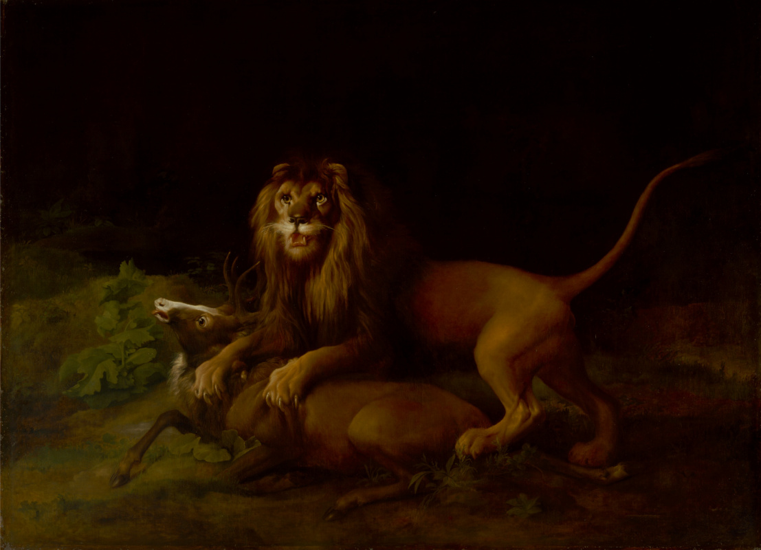 George Stubbs. Lion attacking deer