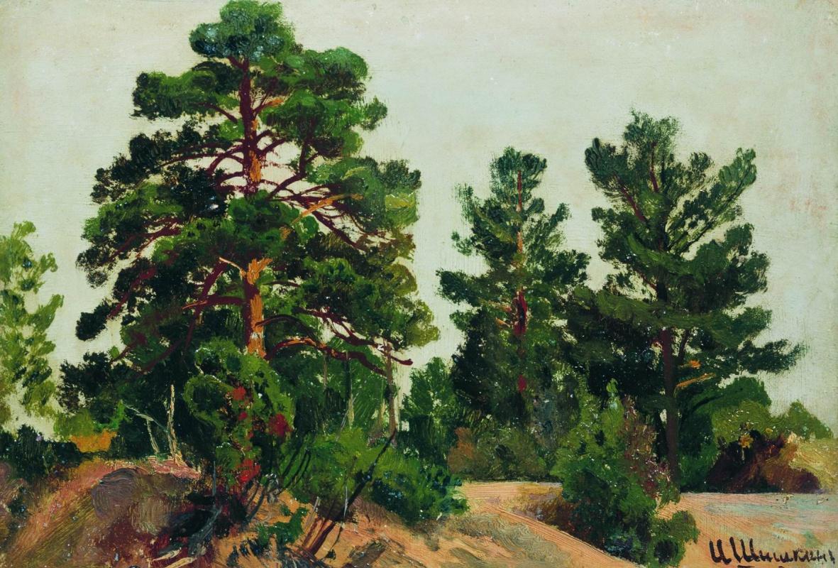 Ivan Shishkin. Young pines