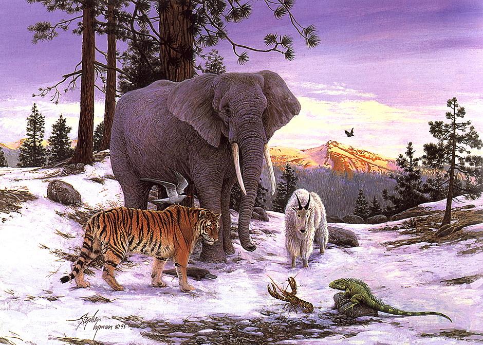 Стивен Лиман. Слон