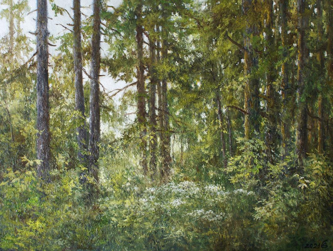 Сергей Владимирович Дорофеев. Sun in the forest