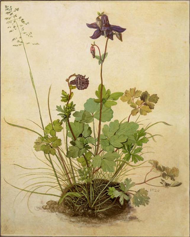 Albrecht Durer. Flower catchment