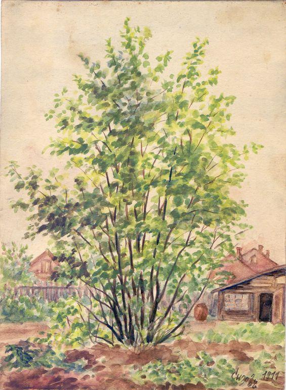 Petr Victorovich Sizov. Country landscape