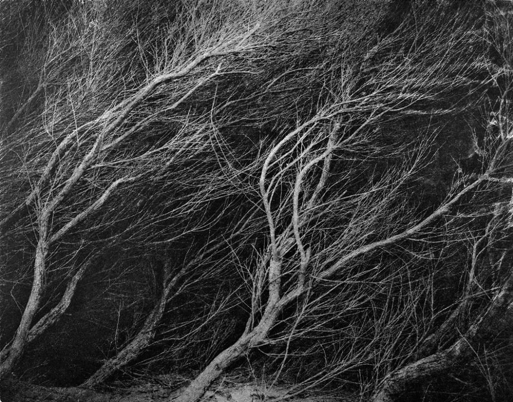 Peter Miller. West wind