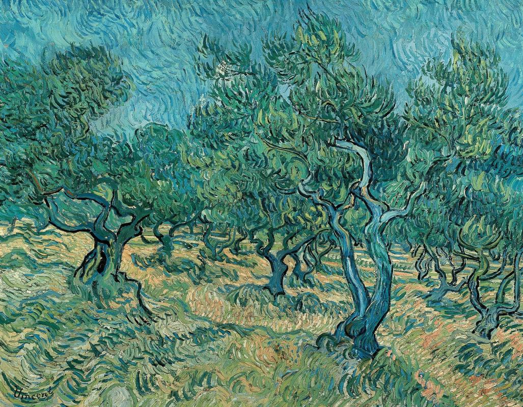 Винсент Ван Гог. Оливковые деревья