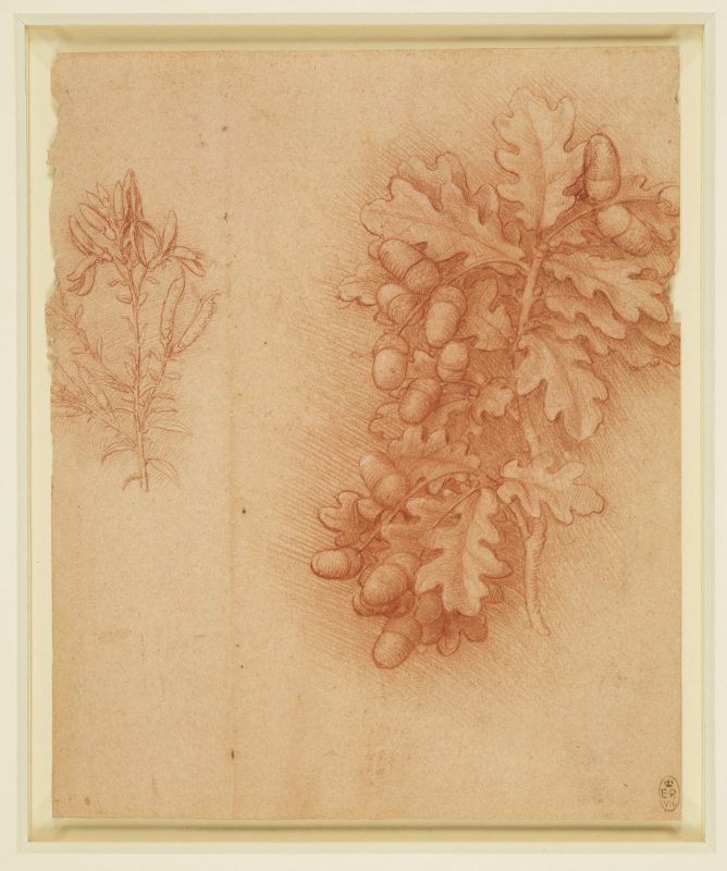 Leonardo da Vinci. Oak and dyer's greenweed