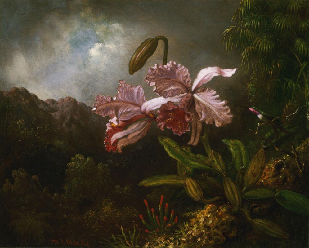 Martin Johnson Head. Orchids in the jungle