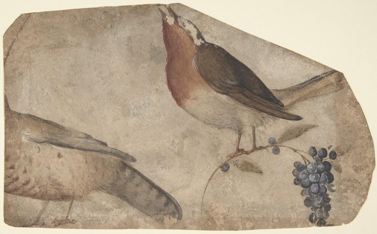 Giovanni yes Udine. Птицы и виноград