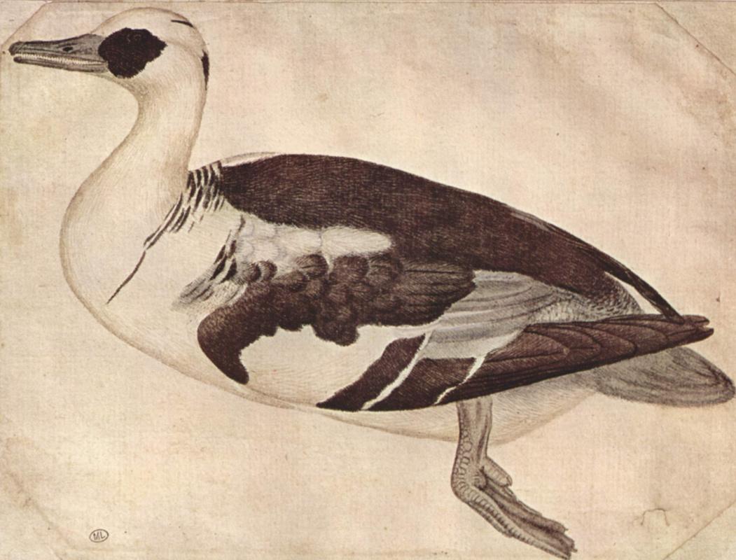 Antonio Pisanello. Duck