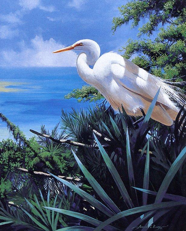 Adrian Rigby. Tropical region