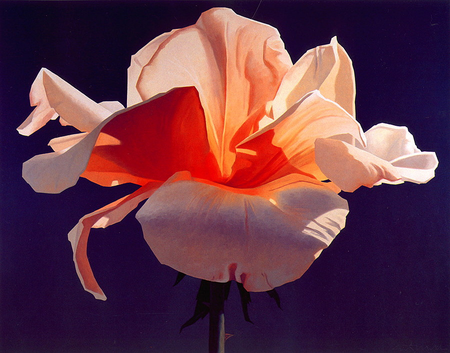 Ed Mell. Fiery rose