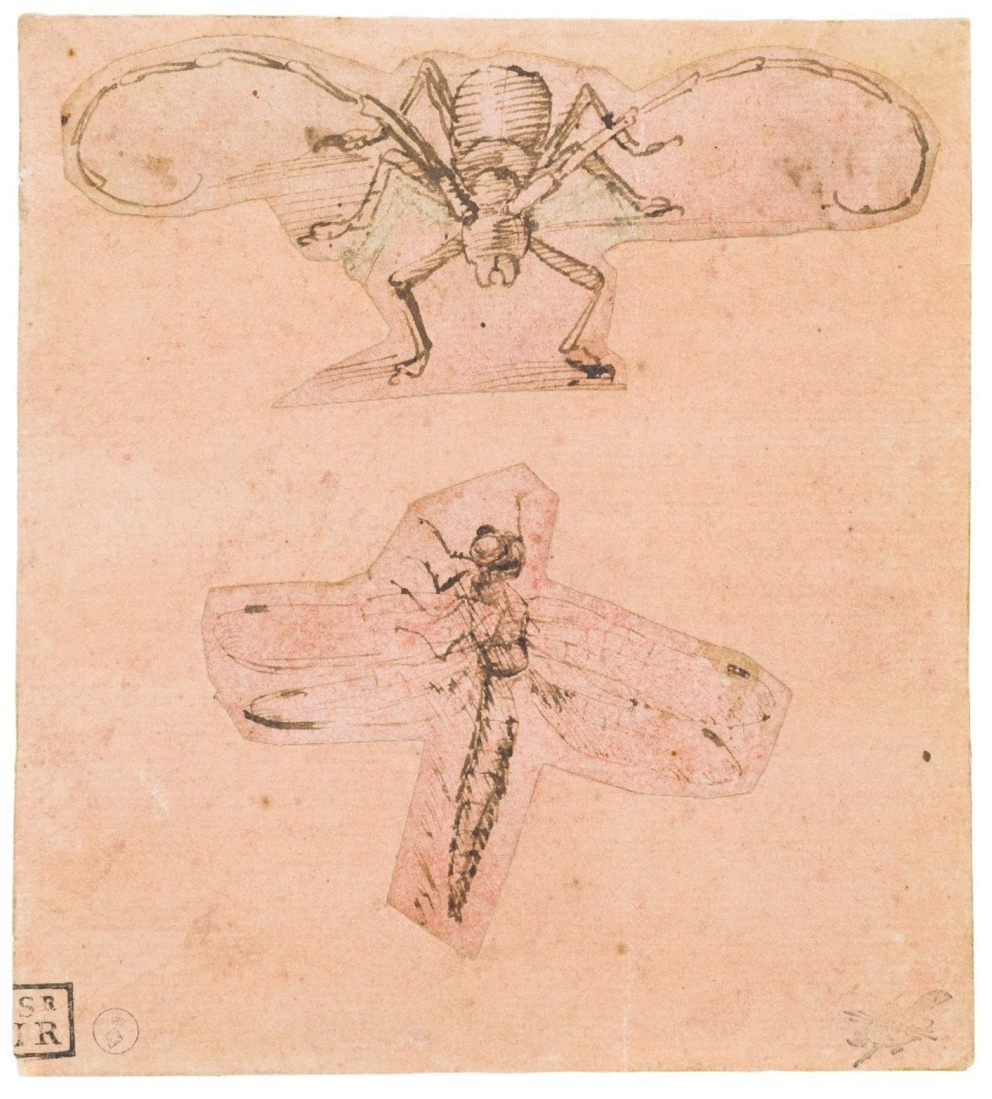 Леонардо да Винчи. Рисунок жука-усача и стрекозы