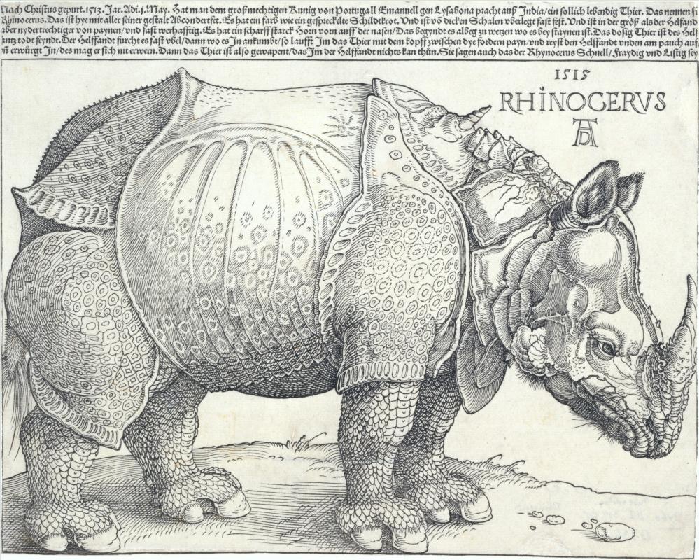 Albrecht Durer. Rhino