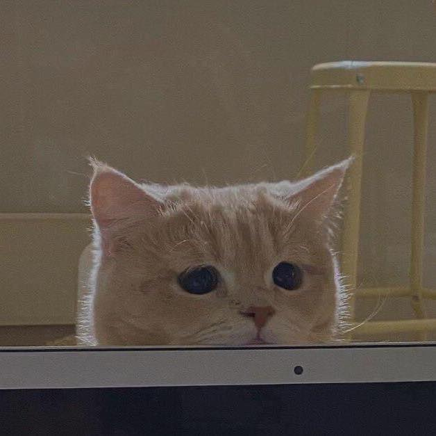 Việt Anh. My sad cat looks so cute