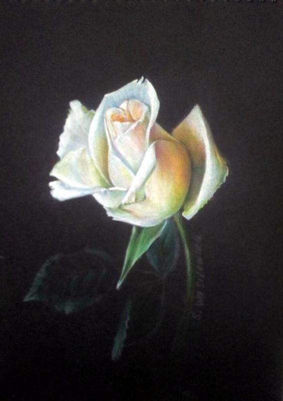 Sophie Wasilewska. Белая роза
