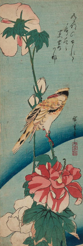 """Utagawa Hiroshige. Black-headed Oriole and a hibiscus flower. Series """"Birds and flowers"""""""