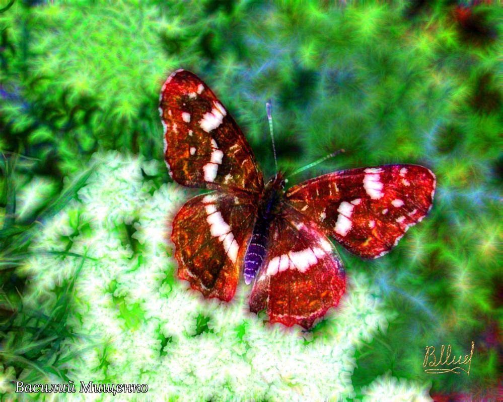 Vasiliy Mishchenko. Butterfly 0105