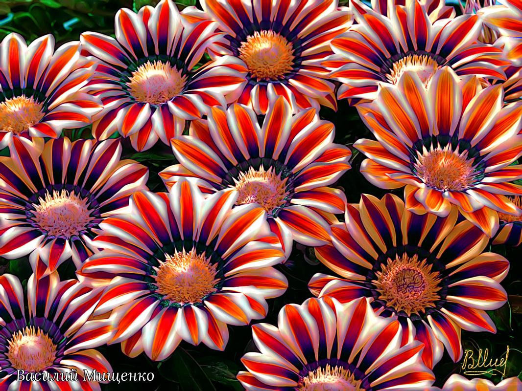 Vasiliy Mishchenko. Flowers 035