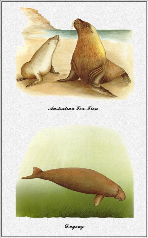 Марион Уэстмакотт. Австралийские млекопитающие 81