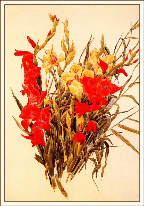 Красные и желтые гладиолусы