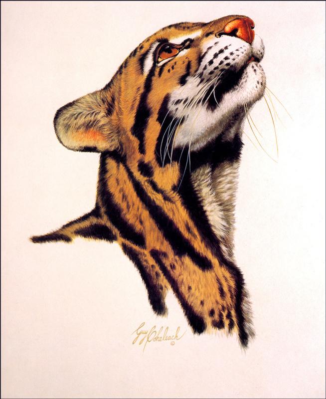 Голова дымчатого леопарда