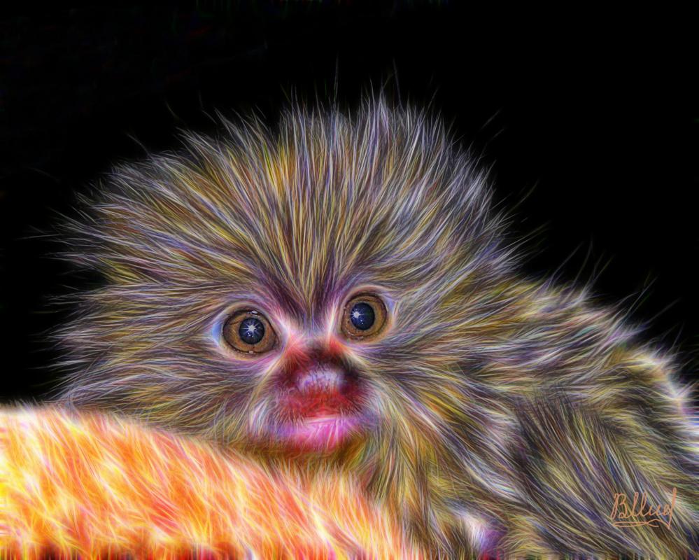 Vasiliy Mishchenko. Little marmoset