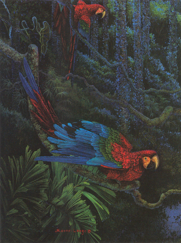 Красный и зеленый ара