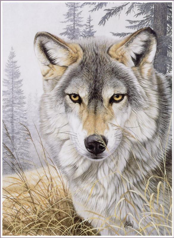 Аль Агню. Волк