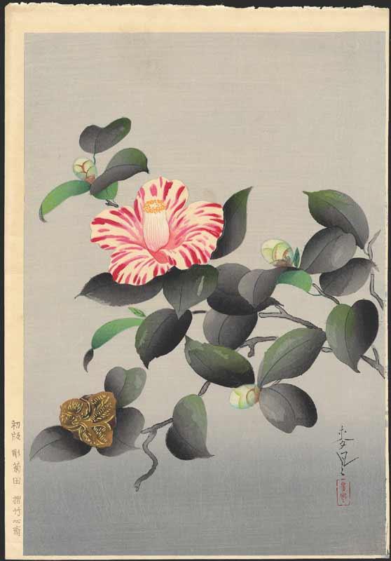 Baku Ono. Camellia