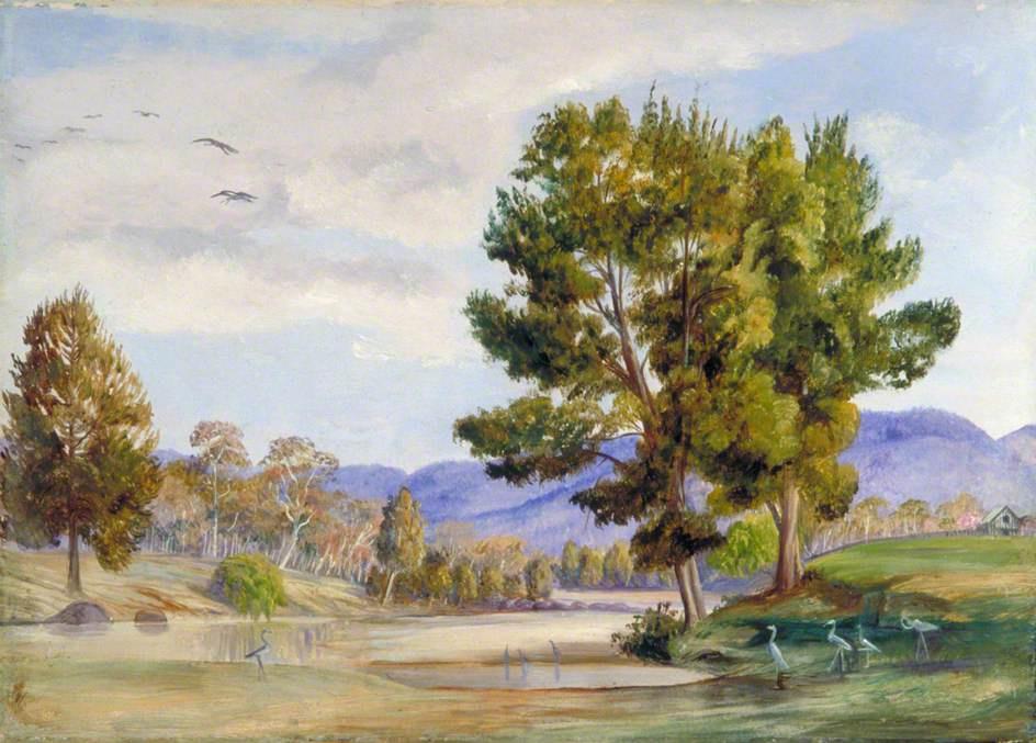 Марианна Норт. Дубовые деревья и птицы-компаньоны у реки Бендамер, Квинсленд