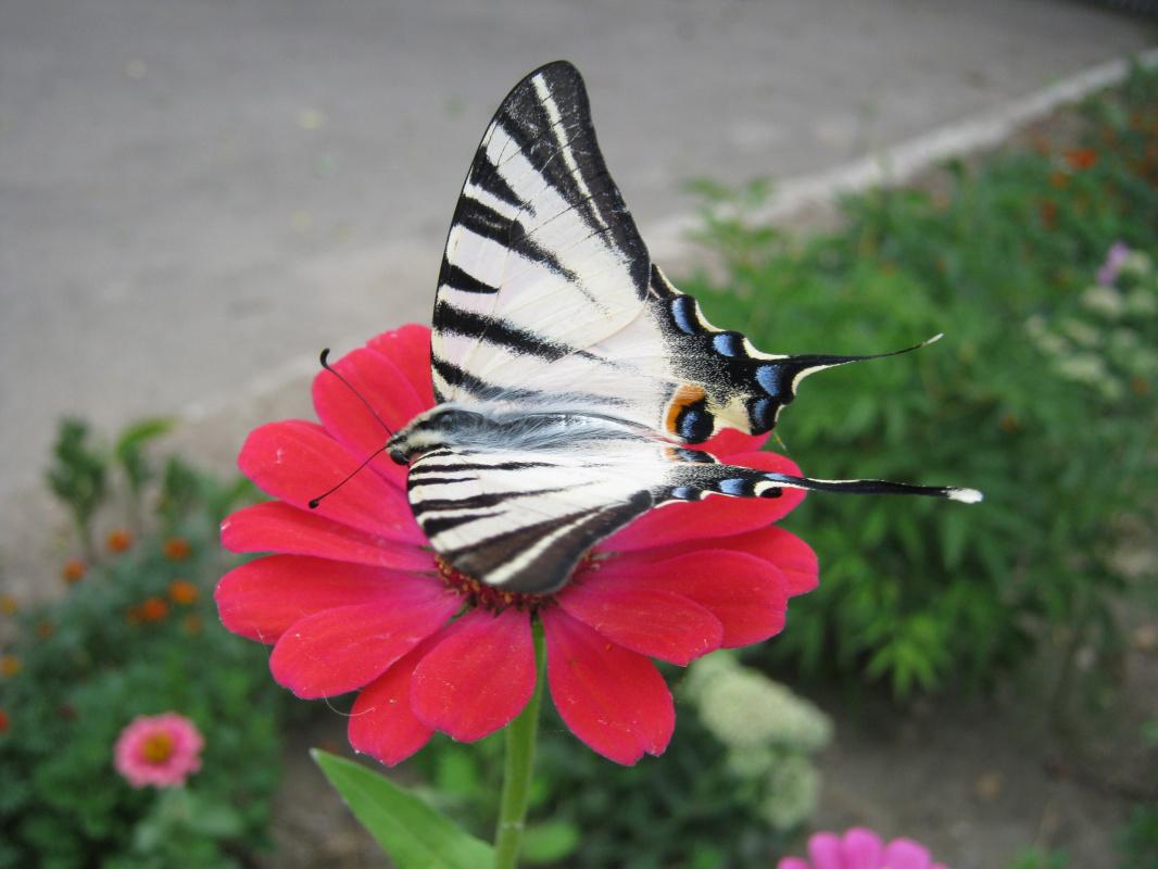 "Alexey Grishankov (Alegri). ""Butterfly in the city"""