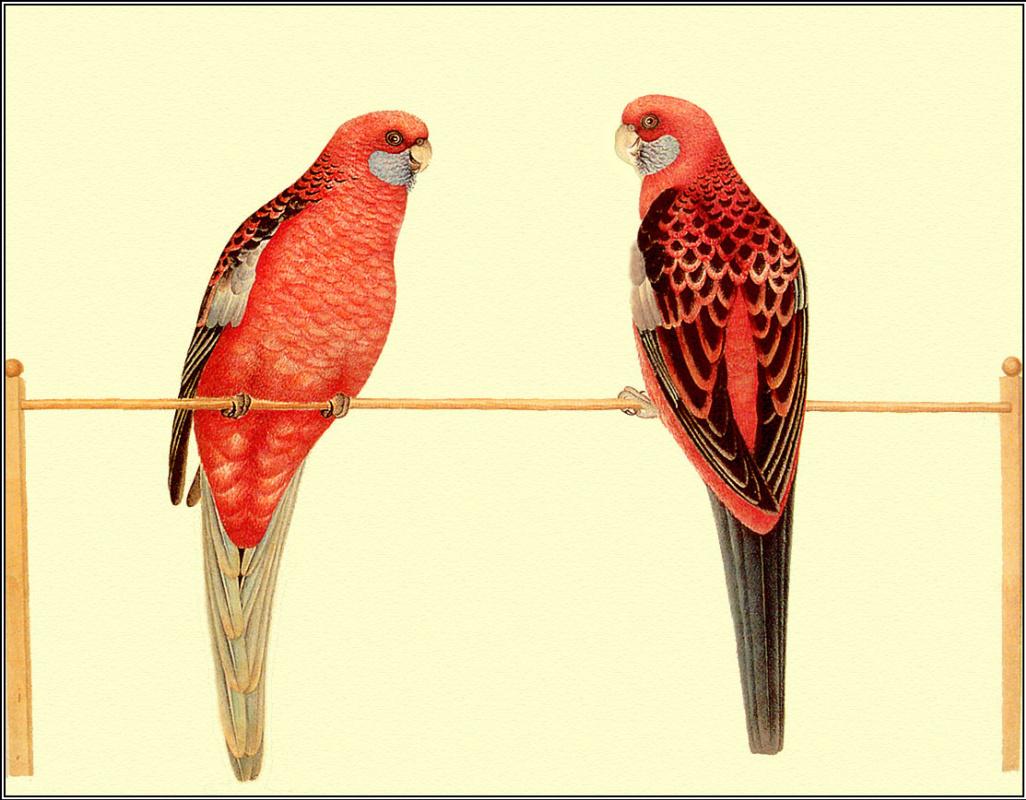 Пенни Олсен. Два попугая