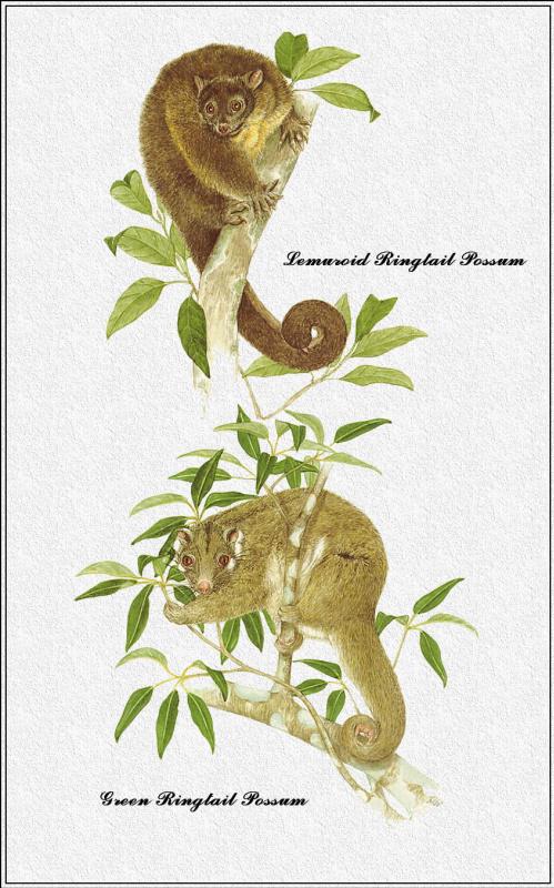 Марион Уэстмакотт. Австралийские млекопитающие 21