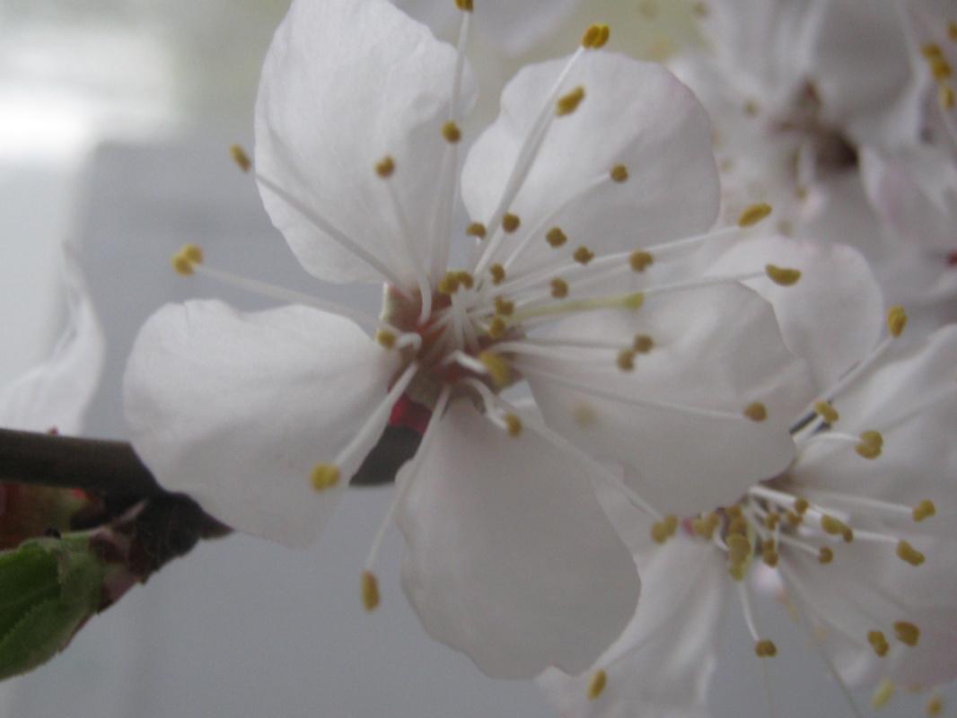 "Alexey Grishankov (Alegri). ""April bloom"" (3)"