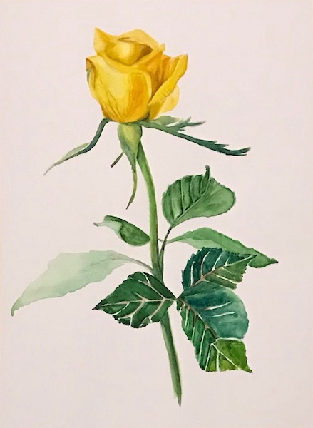 Larissa Lukaneva. Yellow rose