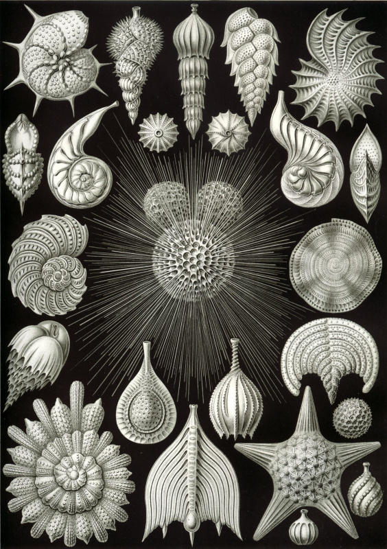 "Ernst Heinrich Haeckel. Sinks. ""The beauty of form in nature"""