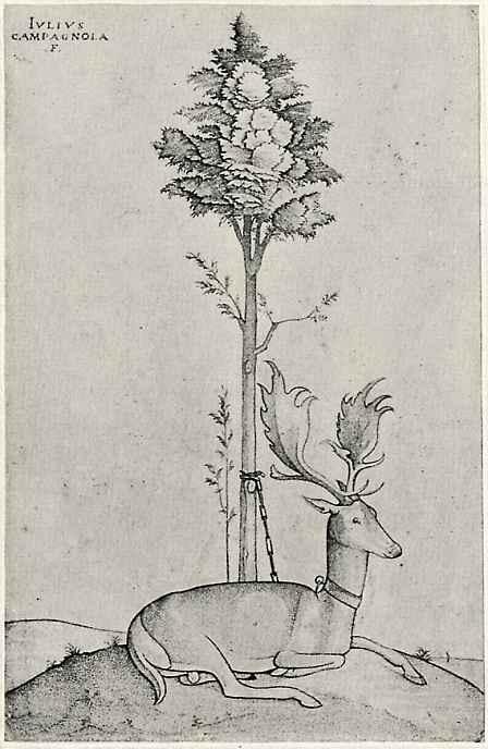 Джулио Кампаньола. Лежащий олень, привязанный к дереву
