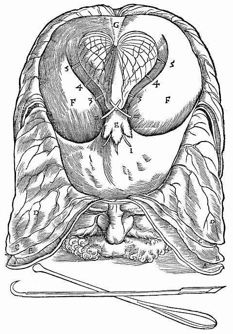 Ханс Бальдунг. Мужская голова с обнаженным малым мозгом