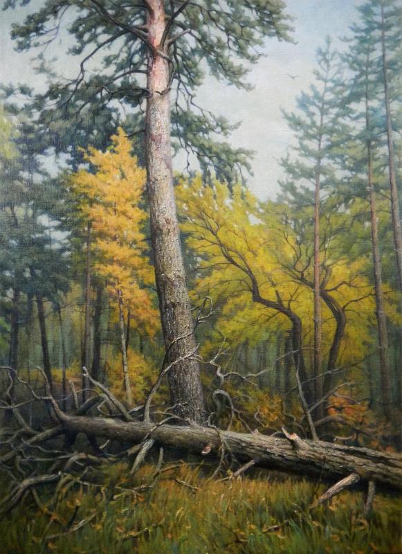 Александр Владимирович Кусенко. Смешанный лес. Сосна