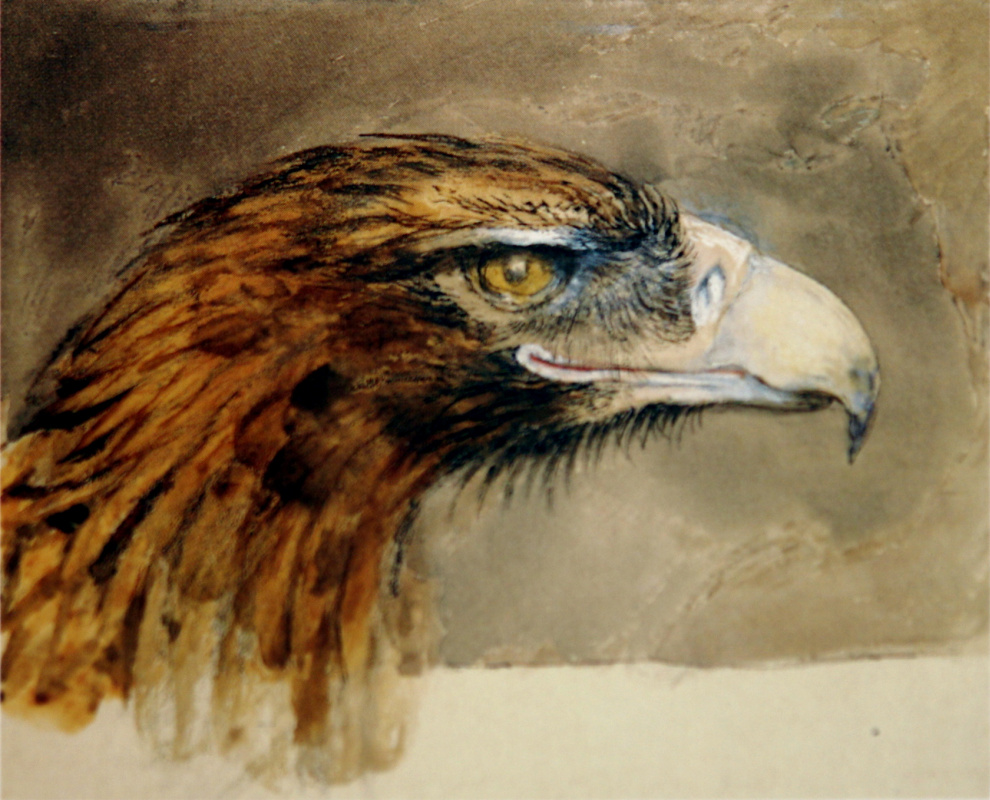 John Ruskin. Golden Eagle (Golden Eagle Head)