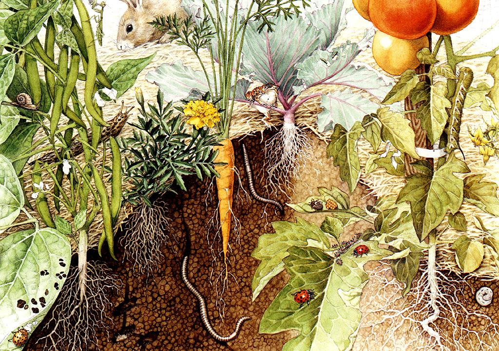 Biruta Akerberg Hansen. The garden