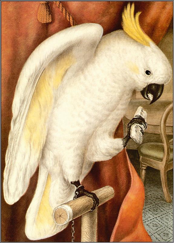 Пенни Олсен. Белый какаду