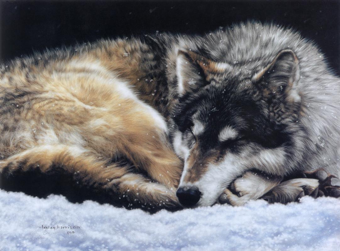 Leslie Harrison. Sleep